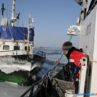 荒天に耐えながら続くテルペニア湾コマイ操業