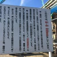 新潟県加茂市、加茂川の鮭を見てきました♪