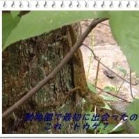 思い出のベトナム(4)ホーチミン動物園