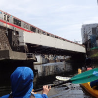日本橋川沿いのしだれ桜は綺麗でした&堅川通行止め解除