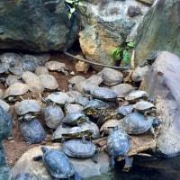 iZOO見て!ふれて!おどろく!体感型動物園♪鶴とカメと…(@ ̄ρ ̄@)
