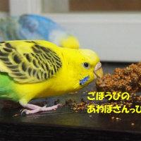 東京にお出かけ・・・からの粟穂っぴ♪