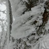 高見山(300名山)①☆エビの尻尾が大きい!