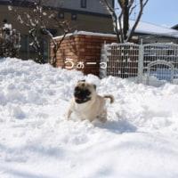 今日も雪あそび