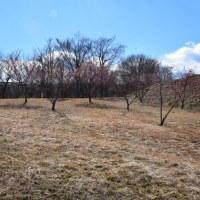 四季折々770  宇津貫緑地の梅