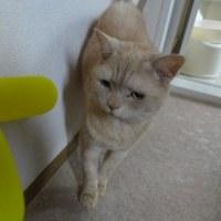 前編)ネコは当惑気味