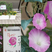 台東区 =「花の心プロジェクト」