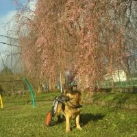 弁慶君と雑草園-⑫