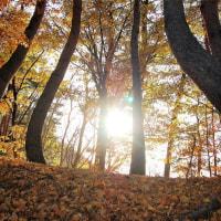 落ち葉の林のその向こう。