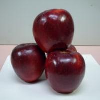 宮城県オリジナルりんご品種「サワールージュ」の加工研修会が開催されました!