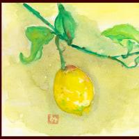 貴重な1個のレモンーー今年の全収穫