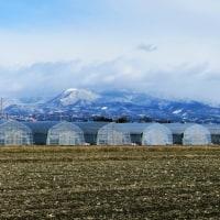 寒い一日、赤城山は雪景色、でもね、春の支度も始まっているんです
