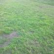 170712 朝の散歩、昼の散歩(74)・・・朝露と川岸の雑草道、水難事故?
