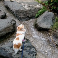 川を渡ろう