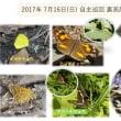 2017年 7月16日(日) 自主巡回 裏高尾【 初夏の開花と人 】