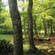 かなしき迷いの森。