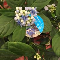 5.14 母の日鉢物・スタンディングブーケ・アレンジメント
