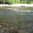 WHY?広瀬川、釣れます!