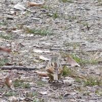 小幡緑地・野鳥の会 へ