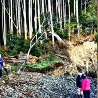 森と海を結ぶ漁民による森づくり