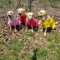 盲導犬協会ふれあいイベント