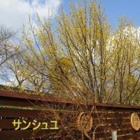 色とりどりの花木が咲き揃ってお迎えです。