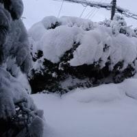 さらに積雪