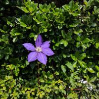 新緑とお花