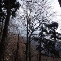 16年12月04日 白神岳1235m 蟶山コース 里程13km 単独