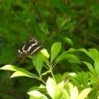 国営アルプスあづみの公園に行ってきました -3/3- (平成29年07月18日)。