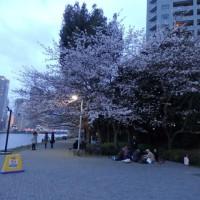組合の花見@隅田川
