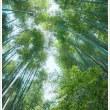 雄岳中腹の竹林