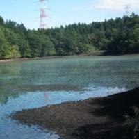 水を抜かれた池