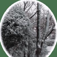 雪だねえ~