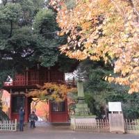ツオップと本土寺と藤亭さん