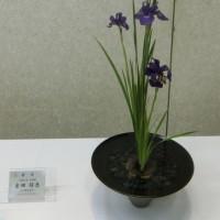 平成29年度 春の文協まつり 「華道展」