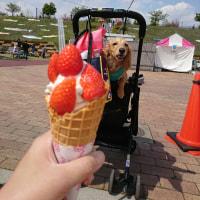 八王子山公園(群馬県太田市)