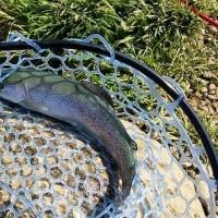 Fish On 王禅寺 4月5日
