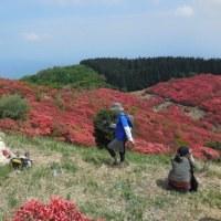 山が真っ赤だ*奈良県葛城山の山つつじ
