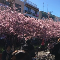 海と河津桜
