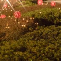 【京都府立植物園】観覧温室の夜間開室とイルミネーション(2016年12月16日~25日)