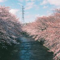 Sakura × APS@2017