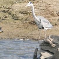 高木池の水鳥など(12月02日)