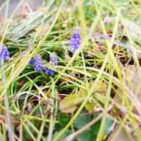 ねねちゃん 庭の花