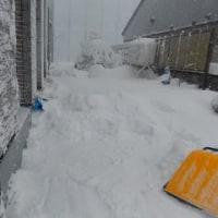 豪雪注意報です。いっぱい積もったわ!