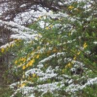 白い花もあり、黄色い花もあり、赤い花もある!