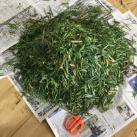春の草木染め