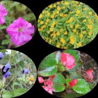今朝の花百科