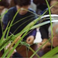 石根先生のワークショップ「ススキ作る秋の虫たち」