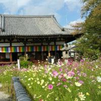 奈良県で6月に行われる音楽祭は?・・(^◇^)